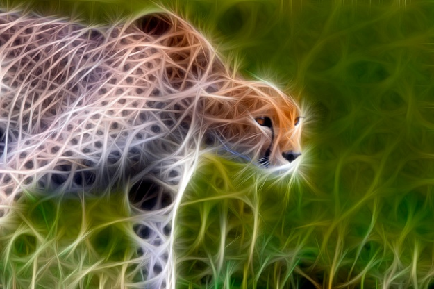 ../img/fractal-cheetah.jpg