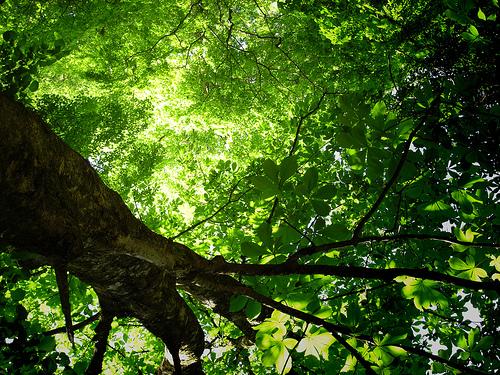 ../img/green-fractal-tree.jpg